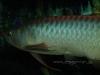 CV Maju Nov2009 075