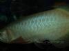 CV Maju Nov2009 078