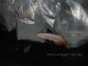 CV Maju Nov2009 093